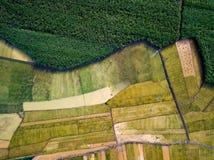 Рис и сахарный тростник fields в южной антенне Китая стоковые изображения rf