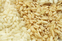 рис крупного плана Стоковые Фото