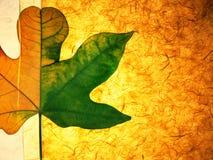рис листьев бумажный Стоковое Фото