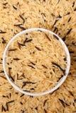 рис одичалый Стоковая Фотография RF