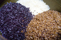 Рис покрашенный с естественными заводами Стоковые Изображения