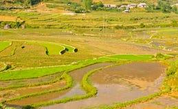 рис полей зеленый terraced Стоковые Фотографии RF