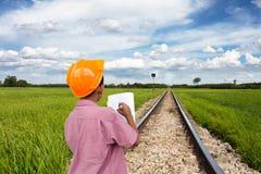 рис полей зеленый Стоковые Изображения