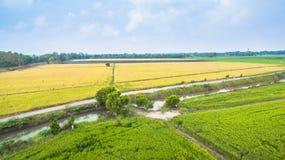 рис полей зеленый Стоковое Изображение RF