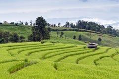 рис поля зеленый terraced Стоковые Изображения