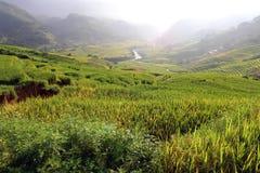 Рис растя в Sapa, Вьетнаме Стоковое Фото