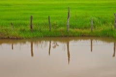 рис Таиланд поля загородки Стоковые Фото