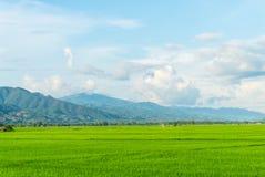 рис Таиланд поля зеленый Стоковые Изображения