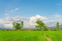 рис Таиланд поля зеленый Стоковые Фотографии RF