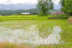 рис Таиланд поля Стоковые Изображения RF
