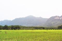 рис Таиланд поля Стоковое Изображение