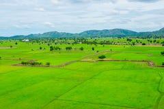 рис Таиланд поля Стоковое фото RF