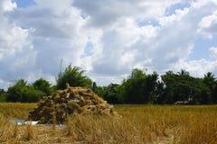 Рис, Таиланд Стоковые Изображения RF