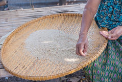 Рис тайский для ест всю персону Стоковая Фотография
