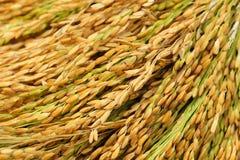 рис тайский Стоковые Фотографии RF