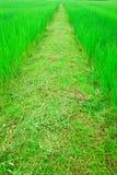 рис тропы далекого поля назначения слишком стоковая фотография rf