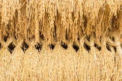 Рис шипа Стоковое Изображение RF