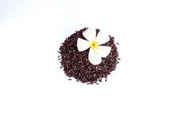 Рис ягоды риса органический на белой предпосылке Стоковые Изображения RF