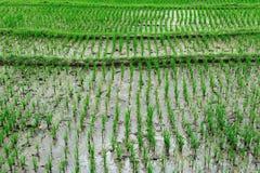 рис 2 Стоковая Фотография RF