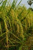 Рис. Стоковое Изображение RF