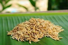 Рис Closedup на зеленой предпосылке листьев Стоковые Фотографии RF