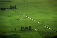 Рис fields воздушное фото Стоковое фото RF