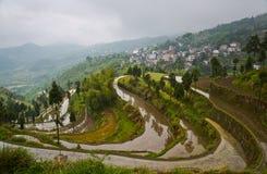 Рис fields на террасном Вэньчжоу, Китая Стоковое Изображение