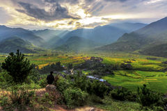 Рис fields на террасном на cang chai Mu, Вьетнаме Стоковая Фотография