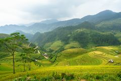 Рис fields на террасном Mu Cang Chai, YenBai, полей риса подготавливает сбор на северо-западном Вьетнаме Ландшафты Вьетнама Стоковые Фотографии RF