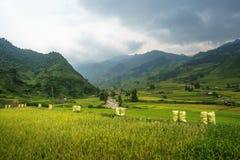 Рис fields на террасном Mu Cang Chai, YenBai, полей риса подготавливает сбор на северо-западном Вьетнаме Ландшафты Вьетнама Стоковая Фотография RF