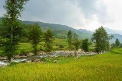 Рис fields на террасном Mu Cang Chai, YenBai, полей риса подготавливает сбор на северо-западном Вьетнаме Ландшафты Вьетнама Стоковые Изображения RF