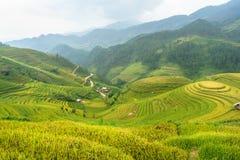 Рис fields на террасном Mu Cang Chai, YenBai, полей риса подготавливает сбор на северо-западном Вьетнаме Ландшафты Вьетнама Стоковая Фотография