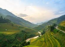 Рис fields на террасном Mu Cang Chai, YenBai, полей риса подготавливает сбор на северо-западном Вьетнаме Ландшафты Вьетнама Стоковое Фото