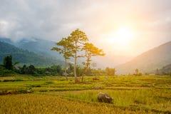 Рис fields на Lim Mong, Tu Le, Mu Cang Chai Стоковые Фотографии RF