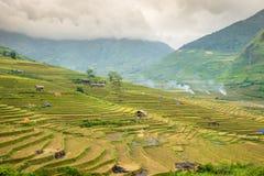Рис fields на Lim Mong, Tu Le, Mu Cang Chai Стоковое фото RF