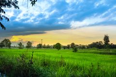 Рис fields сочный зеленый цвет стоковое фото