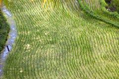 Рис fields терраса, Индонезия, Бали Стоковые Фото