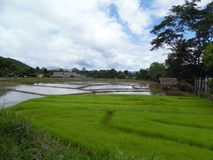 Рис fields Pai, Таиланд Стоковая Фотография