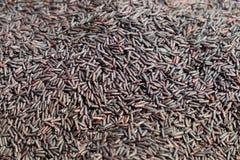 Рис Riceberry Стоковое Изображение RF