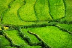 Рис Teraced Fields шагать - вниз от горного склона в Азии стоковое изображение rf