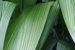 Ритм зеленых листьев Стоковое Изображение