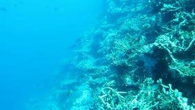 рифы океана Мальдивов коралла индийские акции видеоматериалы