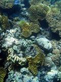 риф барьера большой подводный Стоковые Фото