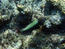 риф барьера большой подводный Стоковое Изображение