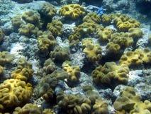 риф барьера большой подводный Стоковая Фотография