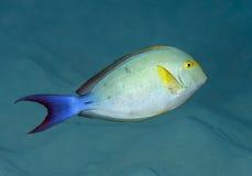 риф барьера doroty большой Стоковая Фотография RF