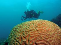 риф водолаза коралла Стоковое Изображение