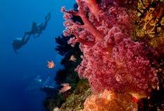риф водолазов коралла стоковые фотографии rf