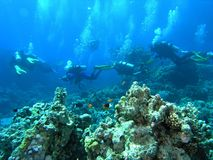 риф водолазов Стоковое Изображение RF