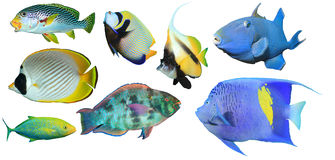 риф изолированный рыбами тропический стоковое фото rf